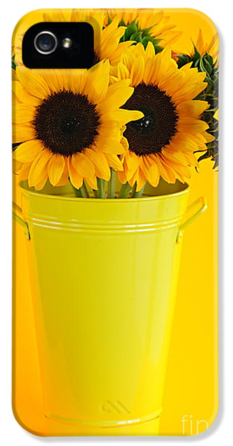 Vase IPhone 5 Case featuring the photograph Sunflowers In Vase by Elena Elisseeva