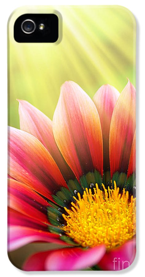Spring IPhone 5 Case featuring the photograph Sunny Daisy by Carlos Caetano