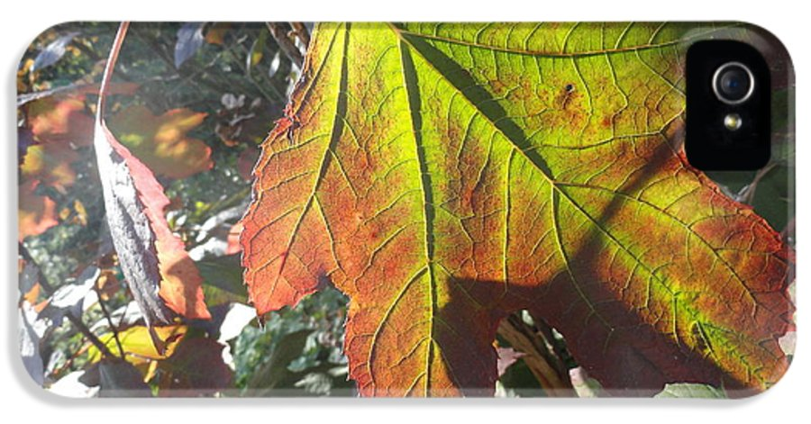 Leaves IPhone 5 / 5s Case featuring the photograph Surrender by Trish Hale