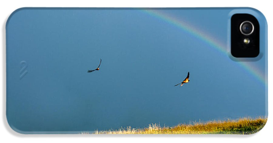 Rainbow IPhone 5 Case featuring the photograph Swallows Under A Rainbow by Thomas R Fletcher