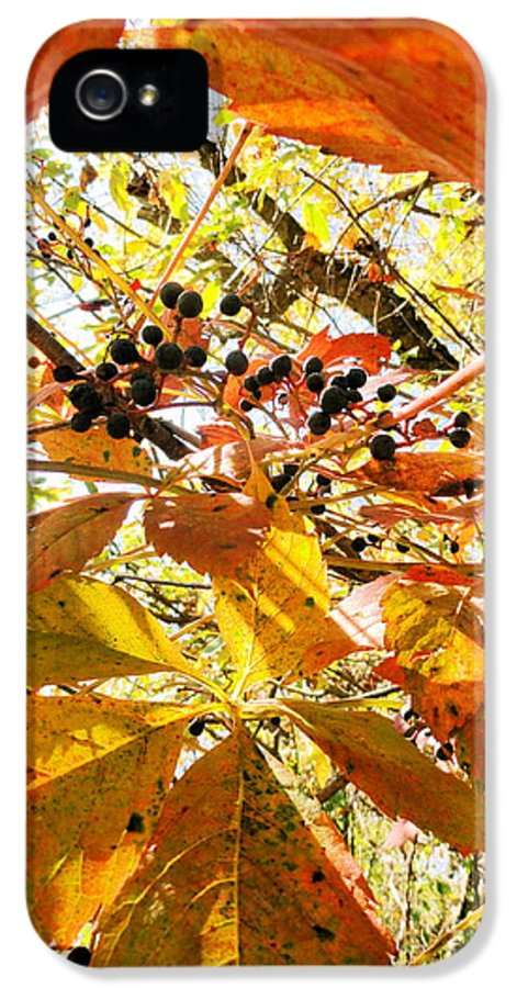 Leaves IPhone 5 Case featuring the photograph The Beauty In Dying by Trish Hale