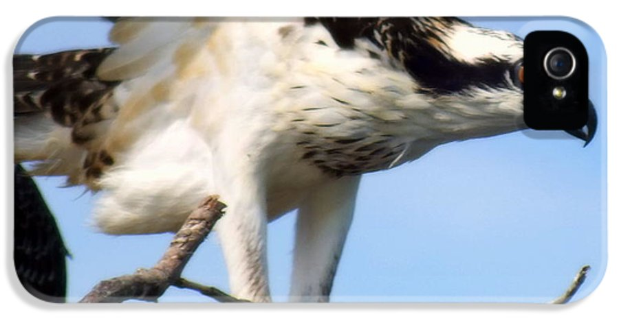 Osprey IPhone 5 Case featuring the photograph The True Fisherman by Karen Wiles