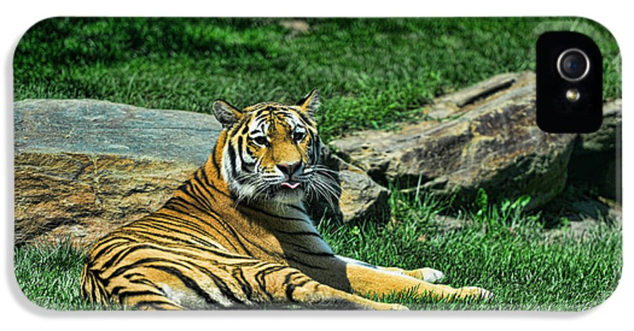 Tiger IPhone 5 Case featuring the photograph Tiger - Endangered - Lying Down - Tongue Out by Paul Ward