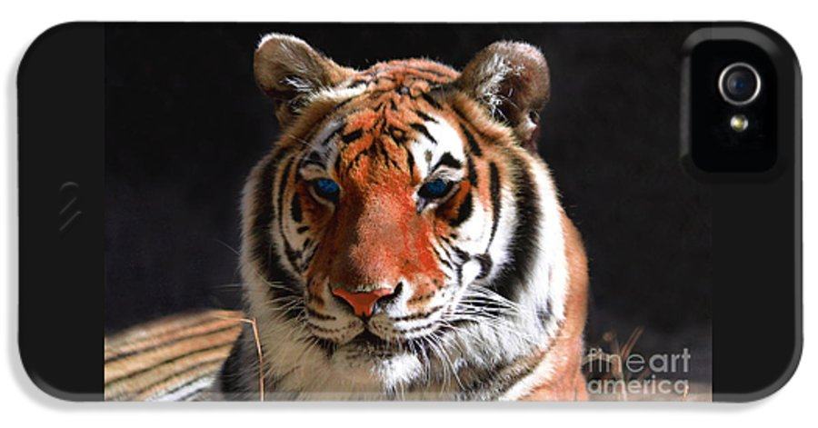 Tiger IPhone 5 Case featuring the photograph Tiger Blue Eyes by Rebecca Margraf