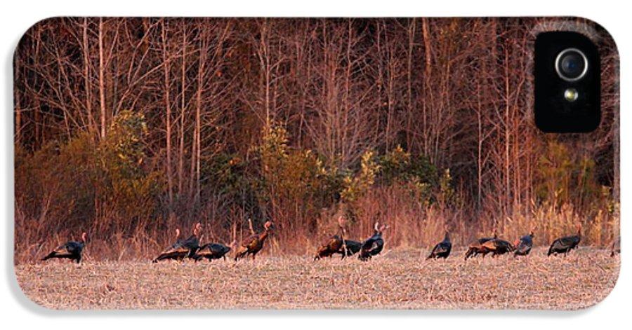 Eastern Wild Turkey IPhone 5 Case featuring the photograph Turkey - Wild Turkey - Seventeen Longbeards by Travis Truelove