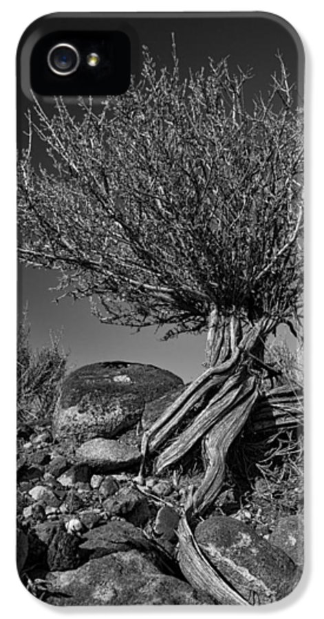 Monotone IPhone 5 Case featuring the photograph Twisted Beauty - Bw by Christopher Holmes