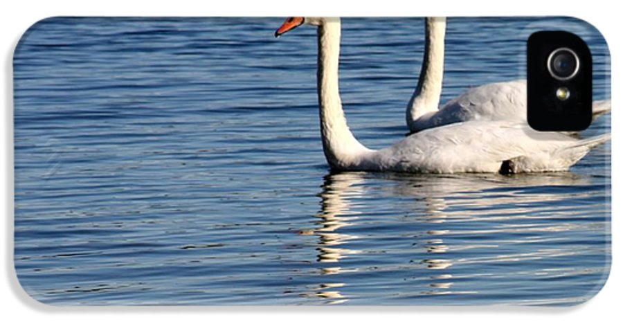 Swans IPhone 5 Case featuring the photograph Two Beautiful Swans by Sabrina L Ryan