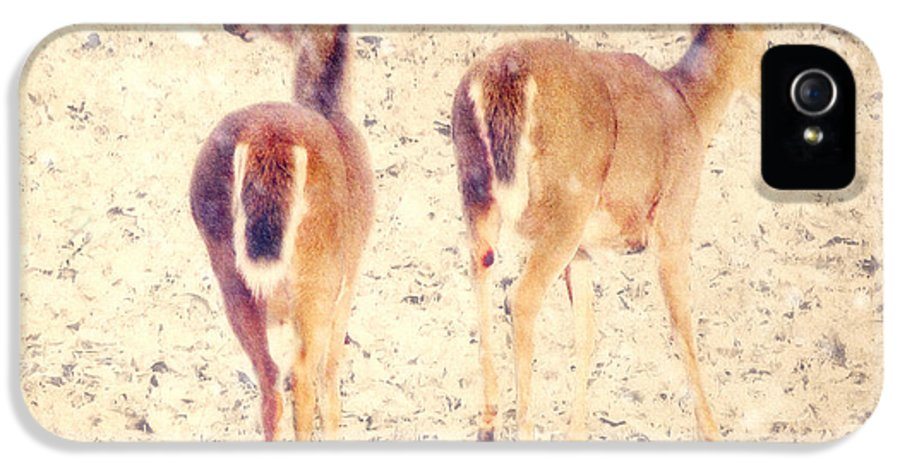 White-tailed Deer IPhone 5 Case featuring the photograph White Tails In The Snow by Amy Tyler