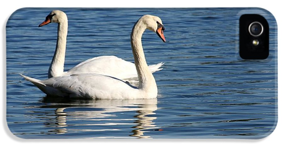 Swans IPhone 5 Case featuring the photograph Wild Swans by Sabrina L Ryan