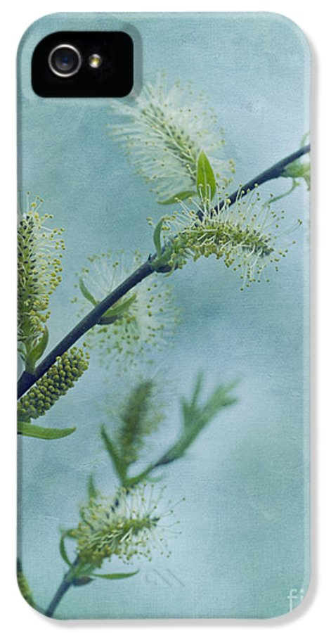Catkins IPhone 5 Case featuring the photograph Willow Catkins by Priska Wettstein