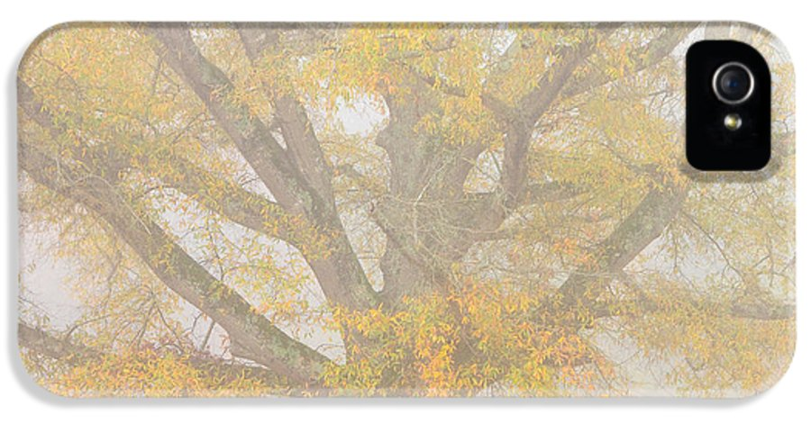 Willow Oak IPhone 5 Case featuring the photograph Willow Oak In Fog by Bill Swindaman