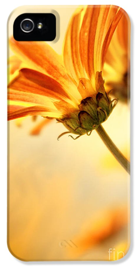 Agriculture IPhone 5 Case featuring the photograph Yellow Daisies by Carlos Caetano