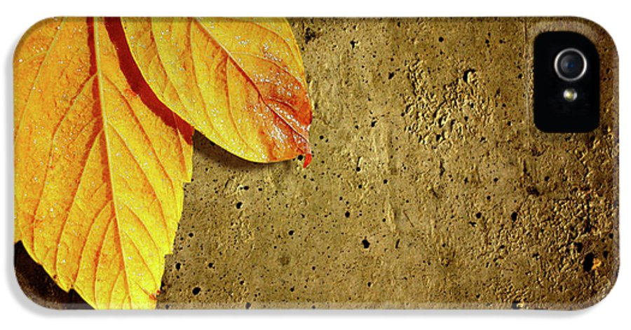 Aged IPhone 5 Case featuring the photograph Yellow Fall Leafs by Carlos Caetano
