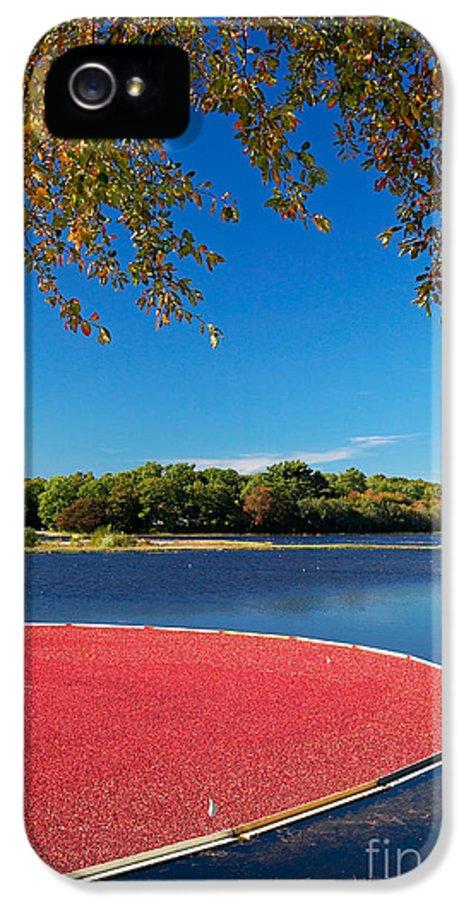Cape Cod IPhone 5 Case featuring the photograph Cape Cod Cranberry Bog by Matt Suess