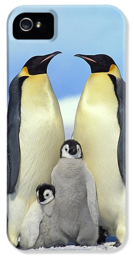 Mp IPhone 5 Case featuring the photograph Emperor Penguin Aptenodytes Forsteri by Konrad Wothe