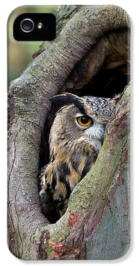 Fn IPhone 5 Case featuring the photograph Eurasian Eagle-owl Bubo Bubo Looking by Rob Reijnen