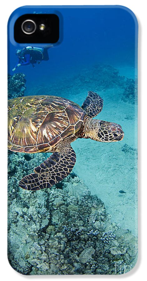 Algae IPhone 5 Case featuring the photograph Green Sea Turtles by Dave Fleetham - Printscapes
