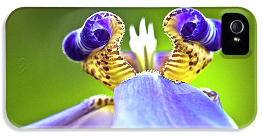 Flora IPhone 5 Case featuring the photograph Iris Flower by Heiko Koehrer-Wagner