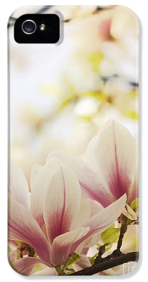Magnolia IPhone 5 Case featuring the photograph Magnolia by Jelena Jovanovic