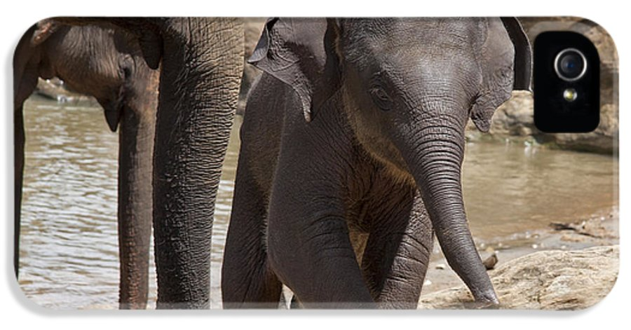 Animal IPhone 5 Case featuring the photograph Mother And Baby by Jane Rix