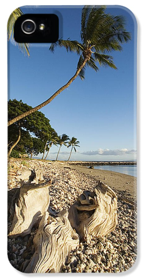 Afternoon IPhone 5 Case featuring the photograph Palm And Driftwood by Ron Dahlquist - Printscapes