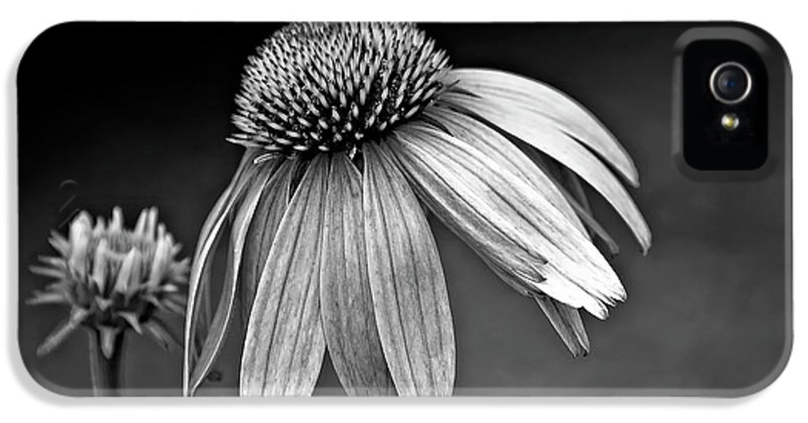 Flower IPhone 5 Case featuring the photograph Passages Bw by Steve Harrington
