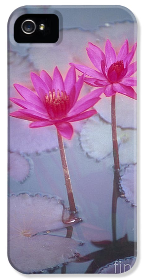 Anther IPhone 5 Case featuring the photograph Pink Lily Blossom by Ron Dahlquist - Printscapes