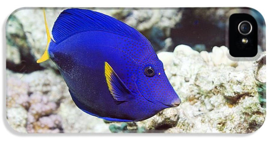 Purple Tang IPhone 5 Case featuring the photograph Powder-blue Tang by Georgette Douwma