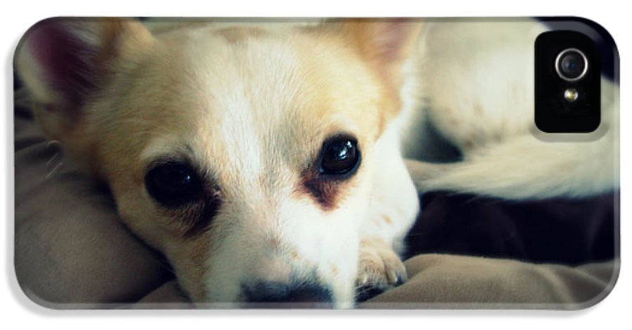 Dog IPhone 5 Case featuring the photograph Rocko by Mandy Shupp