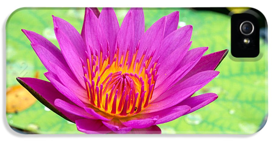 Afternoon IPhone 5 Case featuring the photograph Water Lily by Bill Brennan - Printscapes