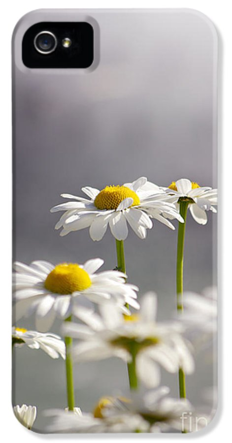 Agriculture IPhone 5 Case featuring the photograph White Daisies by Carlos Caetano