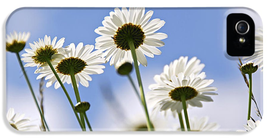 Daisy IPhone 5 Case featuring the photograph White Daisies by Elena Elisseeva