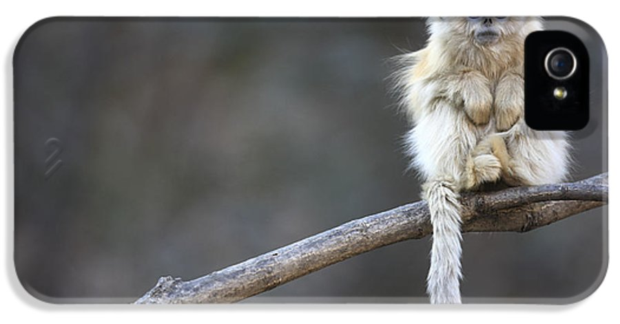 Mp IPhone 5 Case featuring the photograph Golden Snub-nosed Monkey Rhinopithecus by Cyril Ruoso