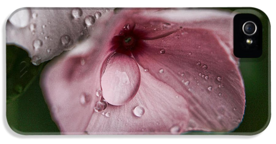 Rainy Day IPhone 5 Case featuring the photograph Refreshed by Bonnie Bruno