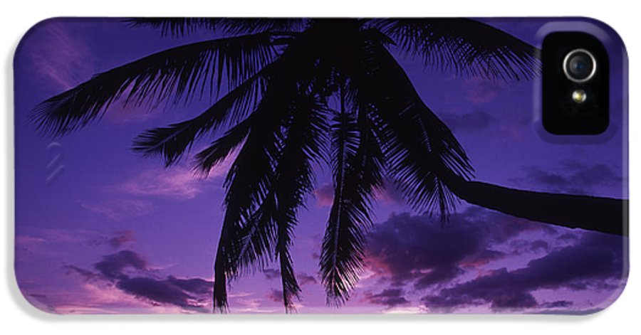 Beach IPhone 5 Case featuring the photograph Palm Over The Beach by Ron Dahlquist - Printscapes