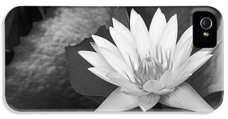 Art Medium IPhone 5 Case featuring the photograph Water Lily by Bill Brennan - Printscapes