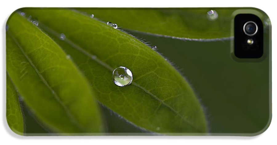 Rain Drop IPhone 5 Case featuring the photograph A Gift by Rebecca Cozart