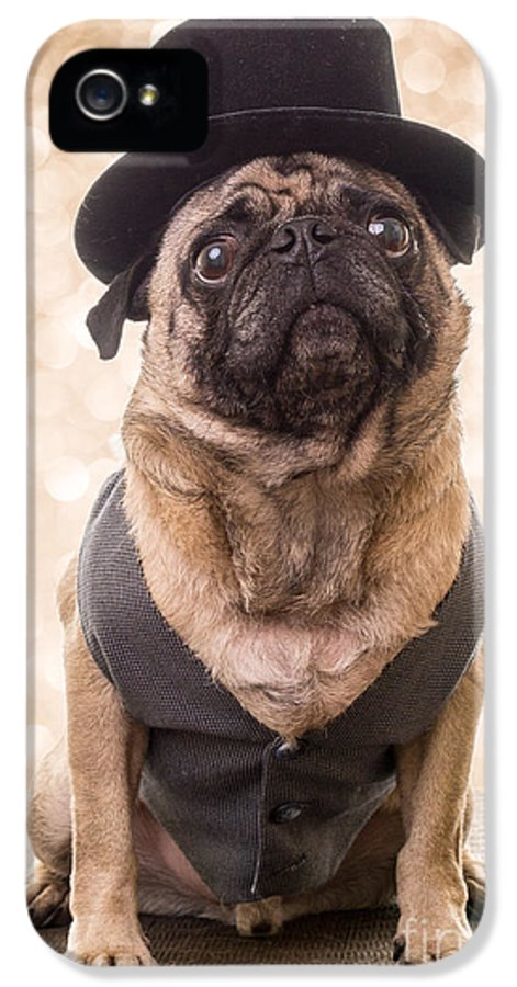 Pug IPhone 5 Case featuring the photograph A Star Is Born - Dog Groom by Edward Fielding
