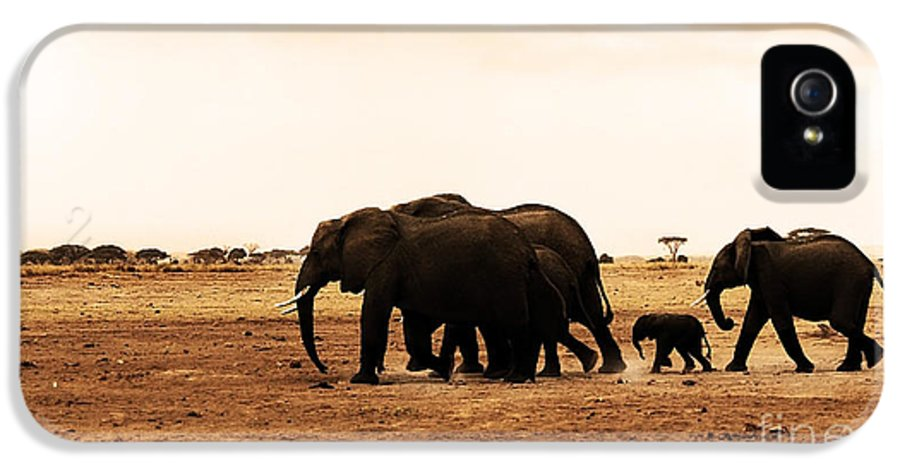 Adventure IPhone 5 Case featuring the photograph African Wild Elephants by Anna Om