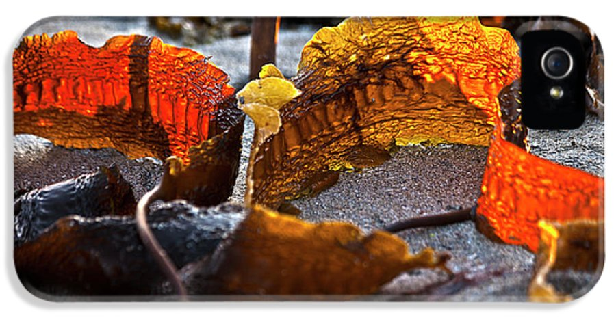 Beach IPhone 5 Case featuring the photograph Algae At Low Tide by Heiko Koehrer-Wagner