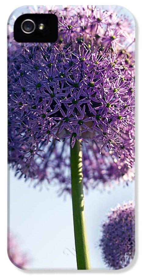 Allium IPhone 5 Case featuring the photograph Allium Flower by Tony Cordoza