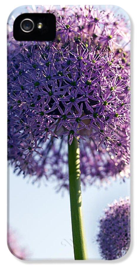 Allium IPhone 5 / 5s Case featuring the photograph Allium Flower by Tony Cordoza