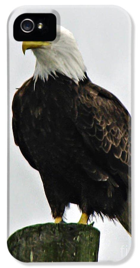 Haliaeetus Leucocephalus IPhone 5 Case featuring the photograph American Bird by Robert Bales