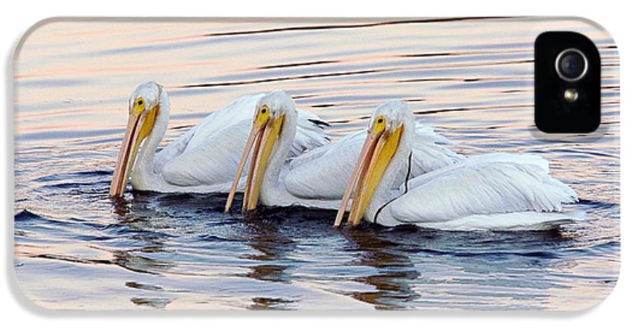 American White Pelicans IPhone 5 Case featuring the photograph American White Pelicans by Bob Gibbons