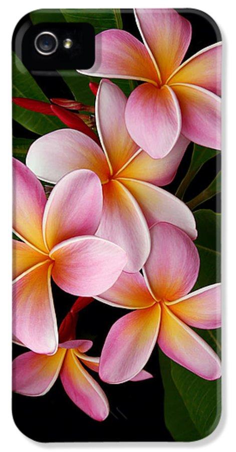 Plumeria IPhone 5 Case featuring the photograph Wailua Sweet Love by Sharon Mau