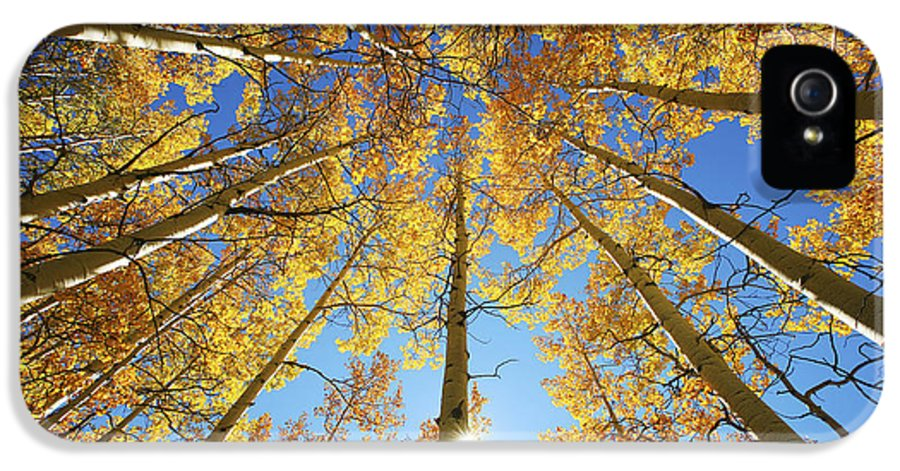 Aspen IPhone 5 Case featuring the photograph Aspen Tree Canopy 2 by Ron Dahlquist - Printscapes