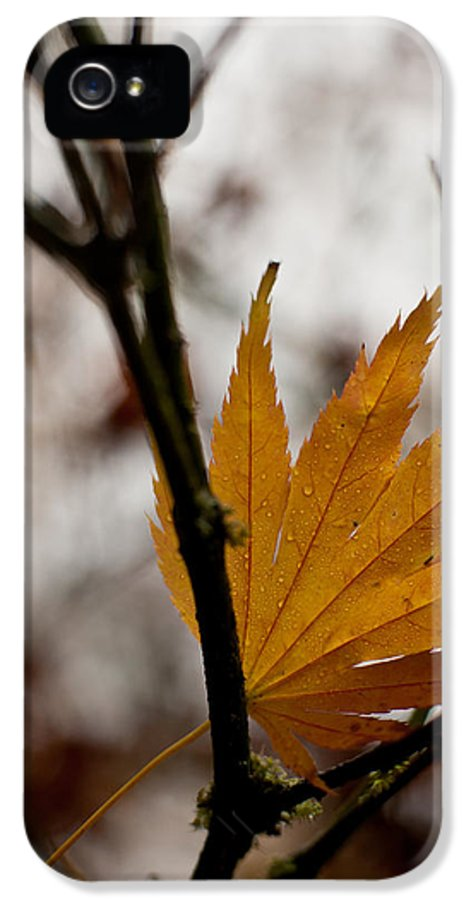 Autumn IPhone 5 Case featuring the photograph At Rest by Mike Reid