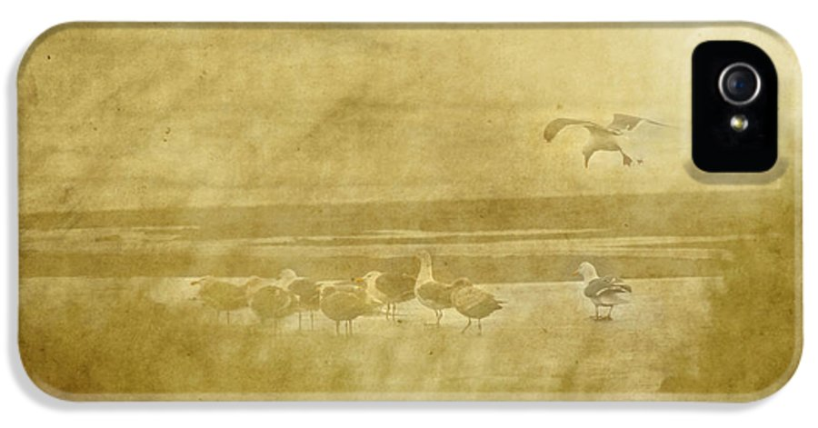 Seagulls IPhone 5 / 5s Case featuring the photograph At The Seashore by Rebecca Cozart