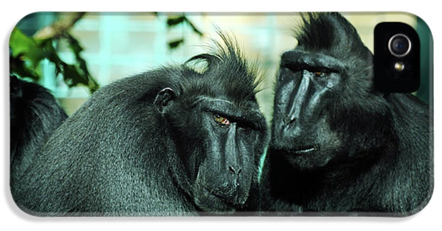 \sulawesi Macaques\ IPhone 5 Case featuring the photograph At The Think Tank by Rebecca Sherman