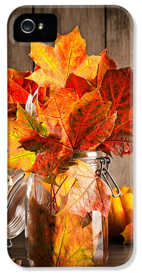 Autumn IPhone 5 Case featuring the photograph Autumn Leaves Still Life by Amanda Elwell